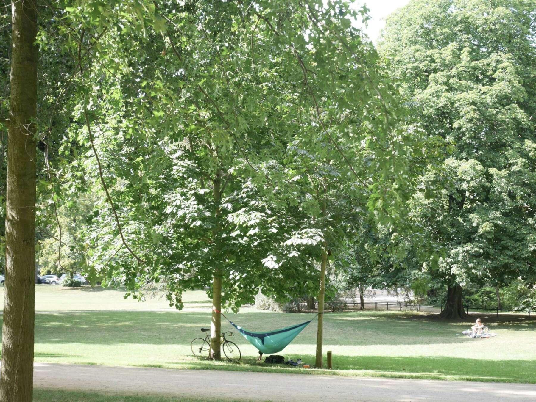 Johanna Park
